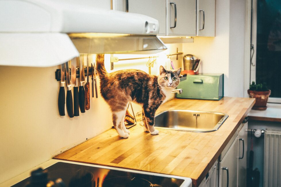 vyberomat.cz kitchen knife scaled